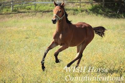 乗用馬の生産