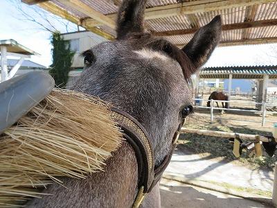 馬を極める道はきっとこの先にある