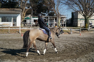 人生で大切なことはすべて馬が教えてくれた