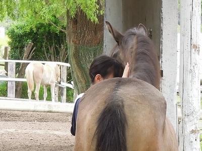 馬の気持ち