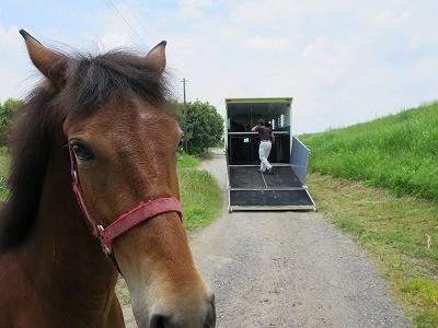 新馬調教 馬とは通じ合える
