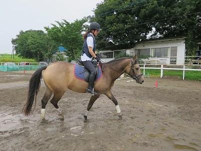 乗馬イメージトレーニング