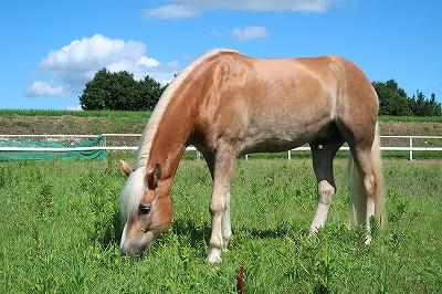 健康な馬の姿