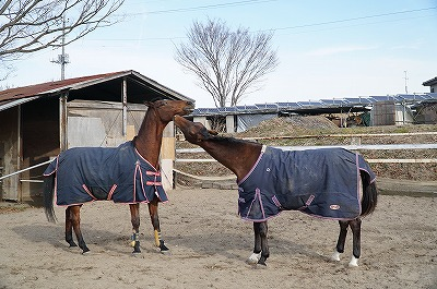 自然な馬の行動は馬語の宝庫