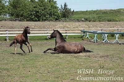 子馬の挨拶