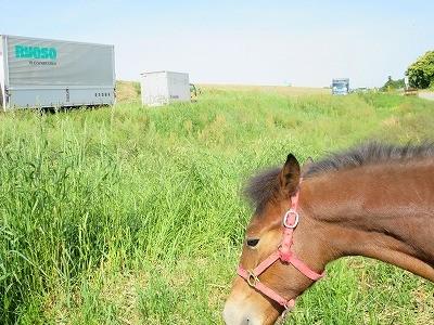 子馬とお散歩乗馬