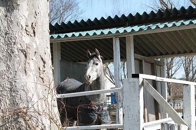 キリッと可愛い馬