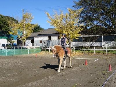 黄葉で金色乗馬