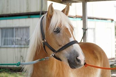 美しい馬と暮らす
