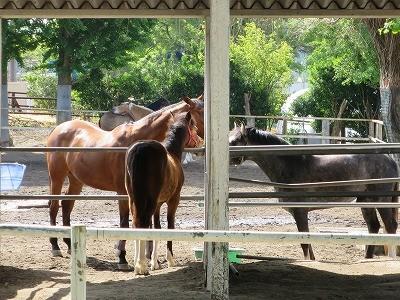 新馬調教 馬を理性あるものとして扱う