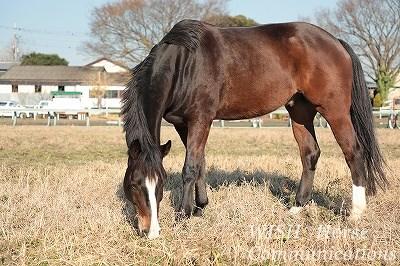毛艶の良い馬