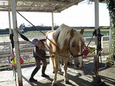 馬と仲良くなる体験乗馬