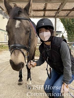 信頼できる乗馬