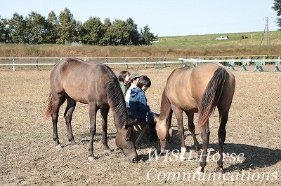 馬に信頼される乗馬