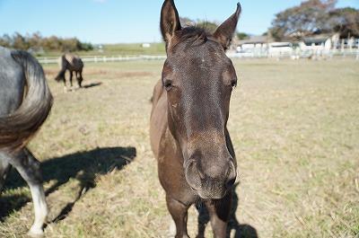 人が好きになるように馬を育てる