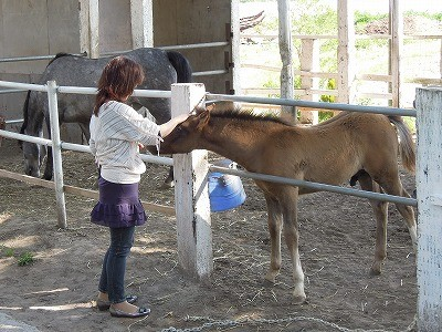 馬とのあいさつ