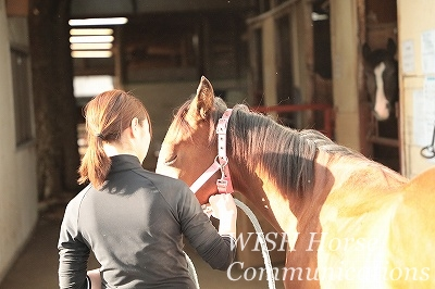 馬との信頼関係