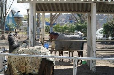 馬の仲良し風景
