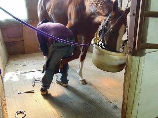 乗馬の装蹄風景