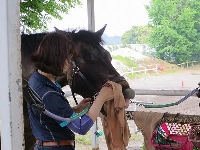 馬を気持ち良くする手入れ