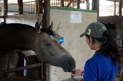 心を開いている馬