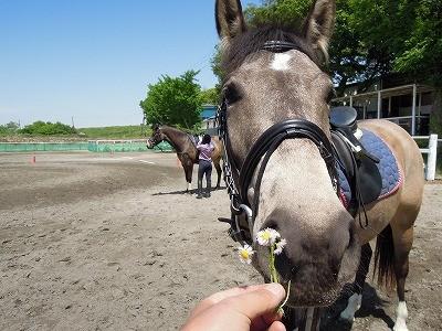 ゴールデンウィークは乗馬
