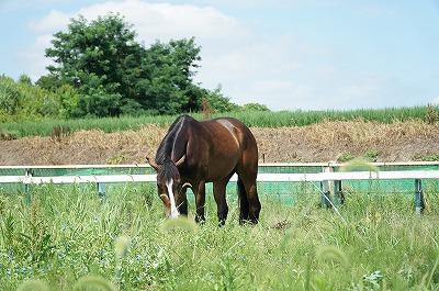 馬に安心して信頼できる生活を