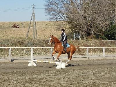 馬を障害飛越好きにさせる