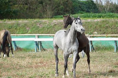 馬の社会性が見られる乗馬クラブ