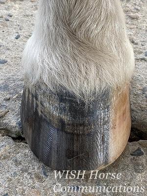 乗馬の健康な蹄