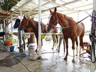 馬とのふれあいは楽しい