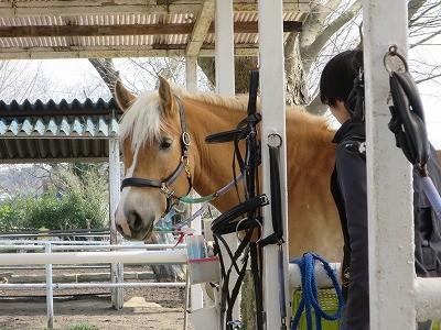 馬の優しい瞳