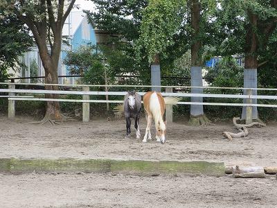 馬に好かれる