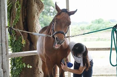 ちゃんと馬のこと口説いてる?(笑)