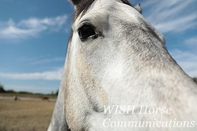 馬と寄り添う乗馬