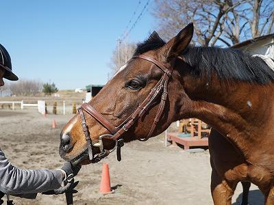 素晴らしい馬