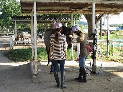 馬とたくさん触れ合える体験乗馬