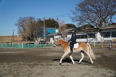 Mクラス馬での練習なんて贅沢すぎる(笑)