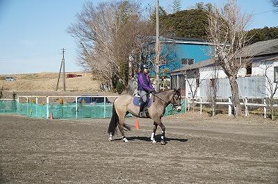 馬を叩いたり蹴ったりすることは馬の自信を無くさせる
