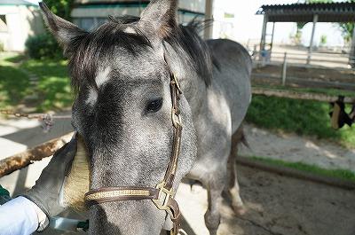 馬に心を開いてもらえているか
