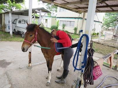 新馬調教 可愛がりつつ重みに馴らす