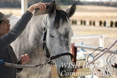 信頼と教育の乗馬