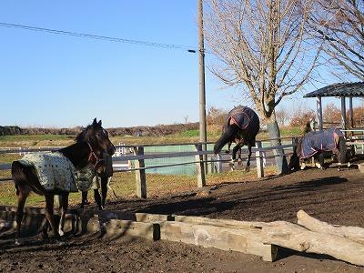 馬の跳躍力