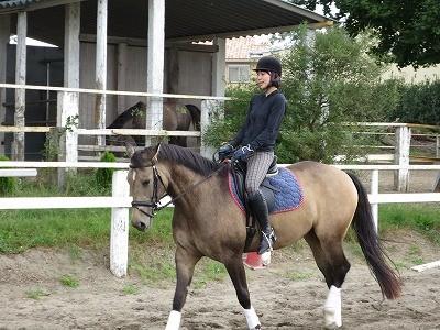 優しい馬と体験乗馬