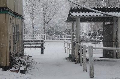 乗馬クラブの雪景色