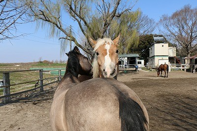 春休み乗馬
