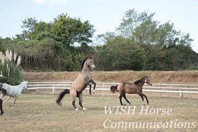 乗馬は紳士淑女のスポーツ