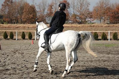 馬が助けてくれる乗馬