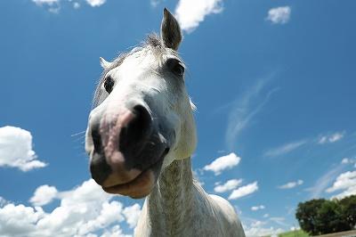馬を穏やかに育てる