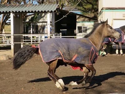 元気で健康な馬